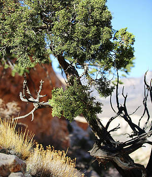Red Rock Canyon NV 5 by Chris Brannen