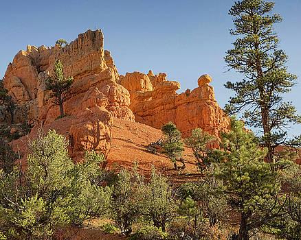 Red Rock Dawn by Timothy Bonesho