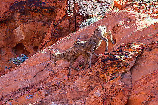 Red Rock Scramble    by James Marvin Phelps