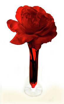 Marilyn Hunt - Red Rose 2