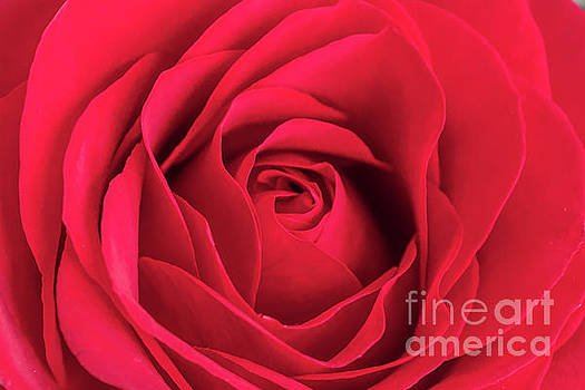 Red Rose Close Up by Kimberly Blom-Roemer