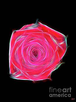 Red Rose by Daniel Janda
