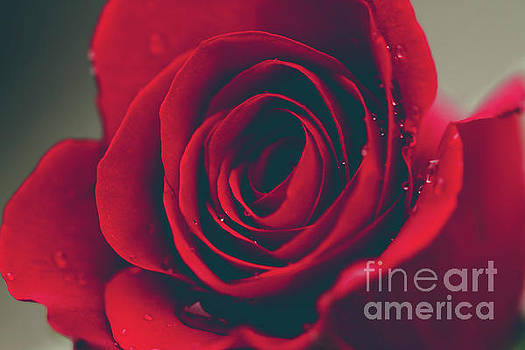Red Rose Floral Bliss by Sharon Mau