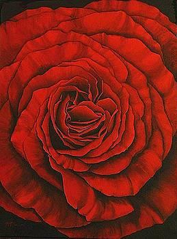 Red Rose II by Rowena Finn