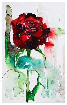 Red Rose by Natalia Stahl