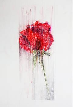 Red rose by Natasha Stahl
