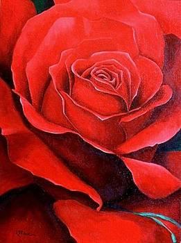 Red Rose by Rowena Finn
