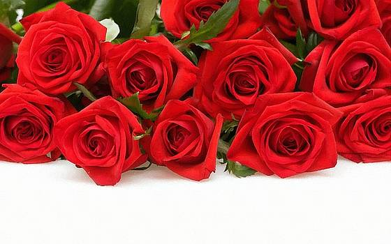 Red Roses by Subesh Gupta