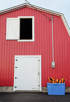Red Shed and Fishing Buoys by Rob Huntley