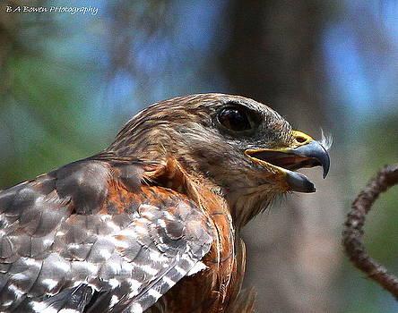 Barbara Bowen - Red Shouldered Hawk - profile