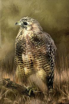 Red Shouldered Hawk by TnBackroadsPhotos