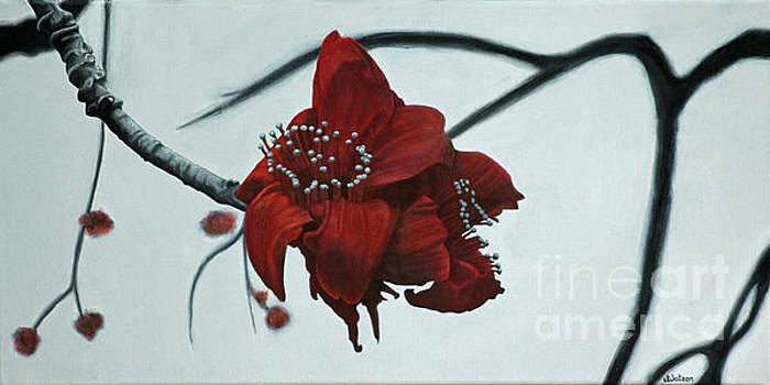Red Silk Cotton Flower by Jennifer Watson