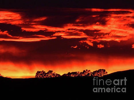 Red Sky by Nicole O'Connor