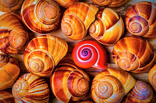 Red Snail Shell by Garry Gay