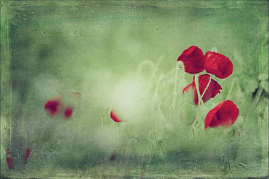 Red Spots - Poppies in a Field by Dirk Wuestenhagen