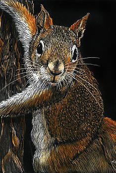 Red Squirrel by William Underwood
