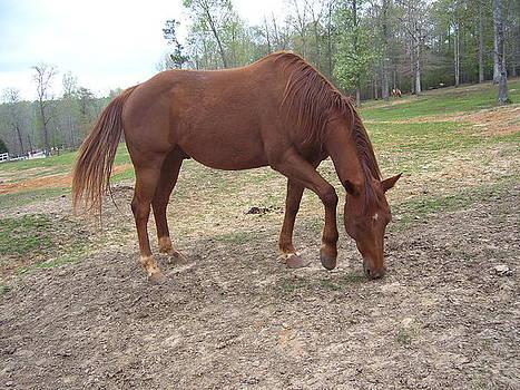 Red Stallion by Kristen Hurley