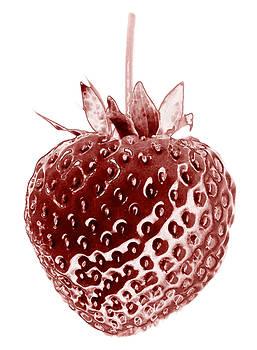Frank Tschakert - Red Strawberry Botanical Illustration