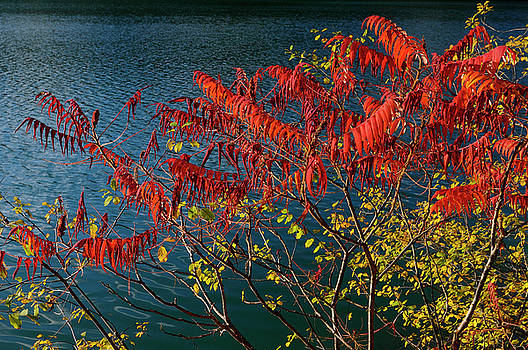 Reimar Gaertner - Red Sumac and yellow leaves against the aqua blue of Pink Lake G