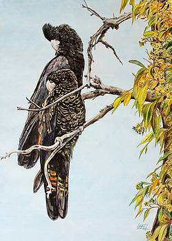 Red Tail Black Cockatoos by Leonie Bell
