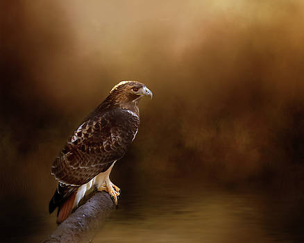 Red Tail Hawk Resting Place by TnBackroadsPhotos