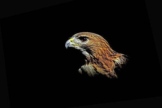 Red Tail Hawk by Stuart Harrison