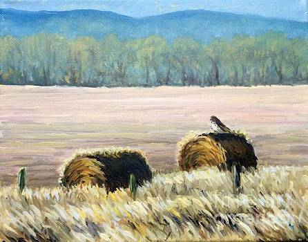 Red tail in the winter field by Hilary England