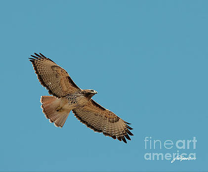 Red Tail by Jim Fillpot