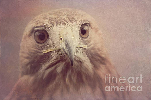 Red-tailed Hawk 4 by Chris Scroggins