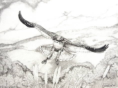 Red-Tailed Hawk of Psalm 104 by Jill Iversen