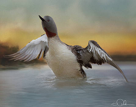 Red Throated Loon by Gloria Anderson