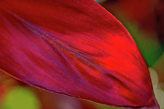 Red Ti Leaves 01 by Gene Norris