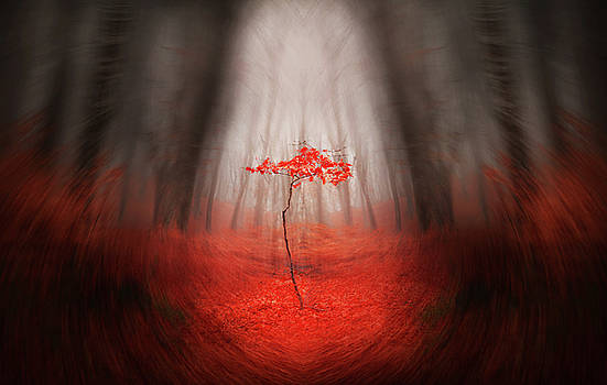 Red by Toma Bonciu