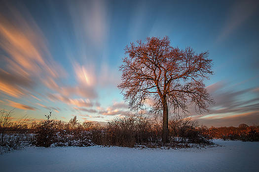 Red tree by Davorin Mance