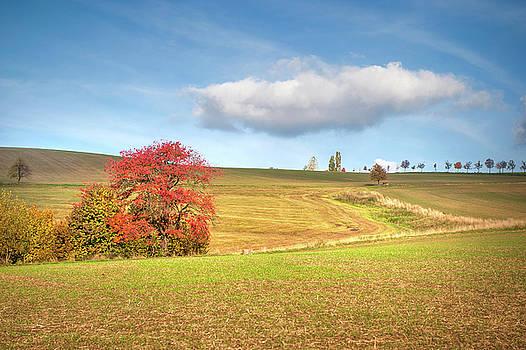 Jenny Rainbow - Red Tree