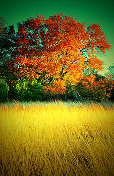 Red Tree by Kori Creswell