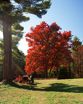 Red Tree by Lee Fortier