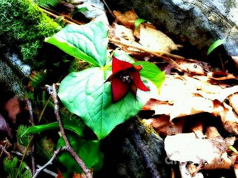 Red Trillium by Jessica Wood
