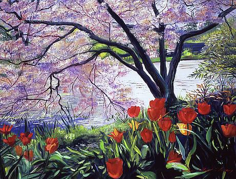 Plum Blossom Serenity by David Lloyd Glover