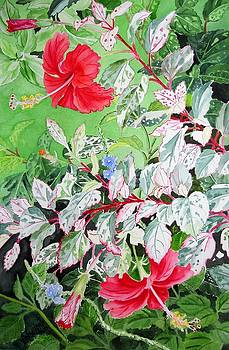 Red Variegated Hibiscus by Vishwajyoti Mohrhoff