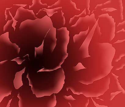 Red Velvet Peony by Alice Chen