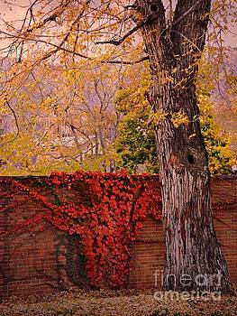 Red Vine with Maple Tree by Annie Gibbons