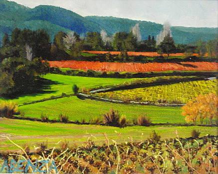 Red Vineyard by Juan Jose Abenza