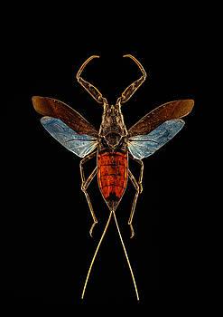 Red Water Scorpion Bug by Gary Shepard