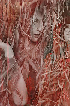 Red Willow  by Pamela Patch