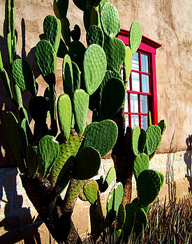 Red Window and Cactus 3 by Bruce Wood