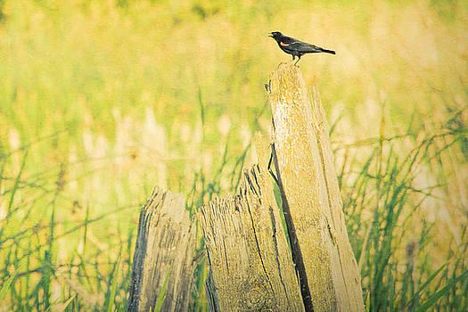 Bonnie Bruno - Red-Winged Blackbird