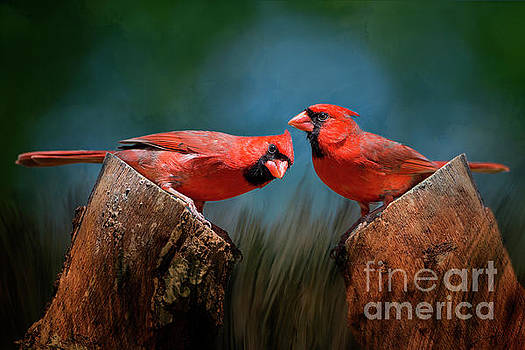 Redbird Sentinels by Bonnie Barry