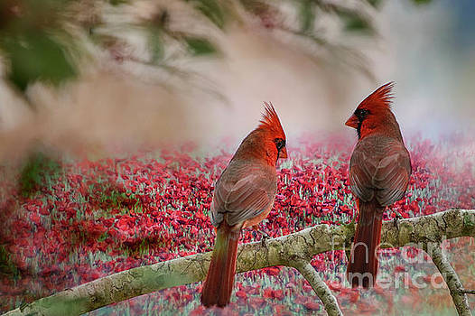 Redbirds at Dusk by Bonnie Barry