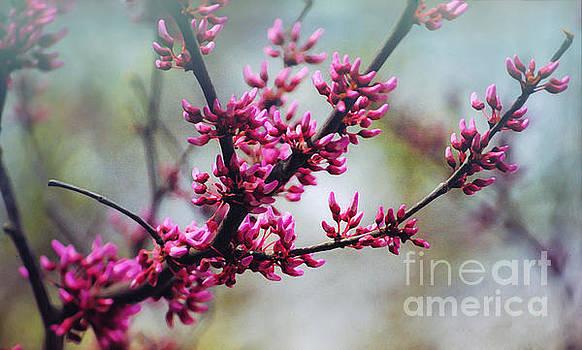 Redbud Beauty by Kerri Farley